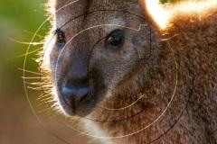Tasmania-2011DSC_413011